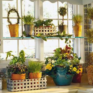10 consejos para proteger las plantas del frío