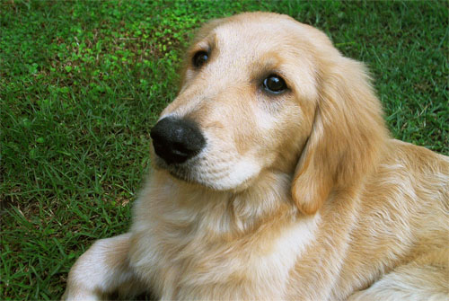 10 razones por las cuales un perro mejora la vida