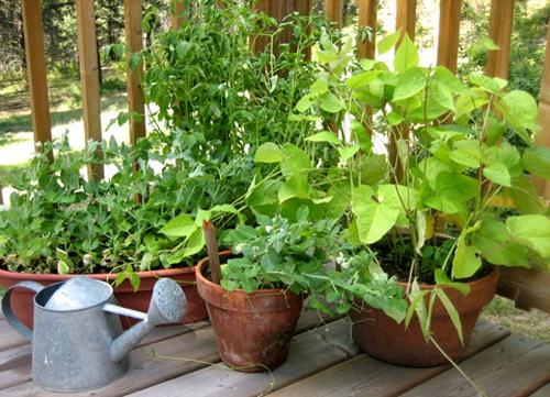8 hierbas depurativas que pueden cultivarse en el balcón