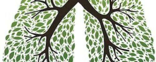8-plantas-beneficas-para-el-sistema-respiratorio_6eqxz