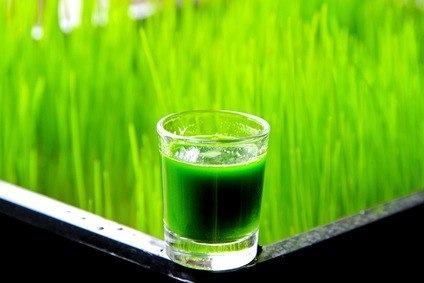 clorofila-suos-beneficios-usos-y-contraindicaciones_pu7m5