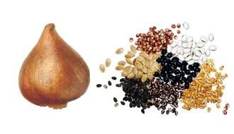 Cómo conservar semillas y bulbos