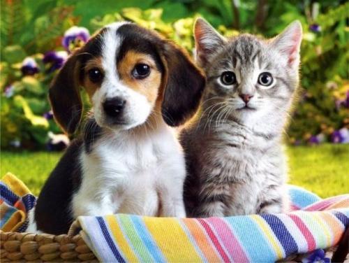 C mo acabar con las pulgas de nuestras mascotas con - Acabar con las pulgas en casa ...