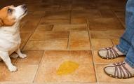 como-quitar-el-olor-de-la-orina-de-los-perros-y-preparar-repelentes-naturales_trday