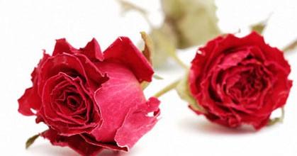 como-secar-las-rosas-de-su-jardin_6idf1