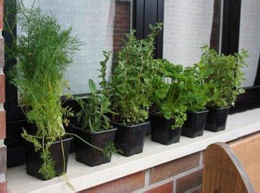 Consejos para cultivar hierbas arom ticas en el balc n for Plantas aromaticas en macetas