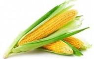 el-maiz-y-sus-usos-medicinales_w9axf