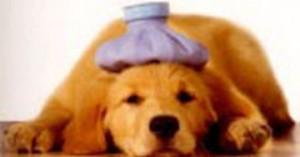 medicina-natural-tambien-para-nuestras-mascotas_epqfg