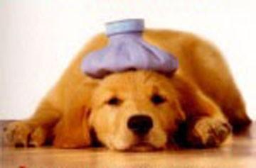 Medicina natural también para nuestras mascotas