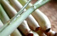 numerosos-usos-del-limoncillo-o-hierba-de-limon_t9es0