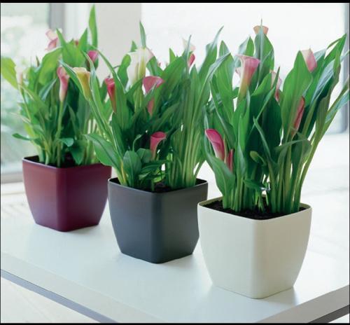 Peque a gu a para cultivar plantas dentro de la casa remedios - Plantas en el interior de la casa ...