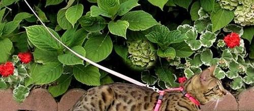 Hiedra archivos remedios caseros remedios naturales y - Plantas venenosas para gatos ...