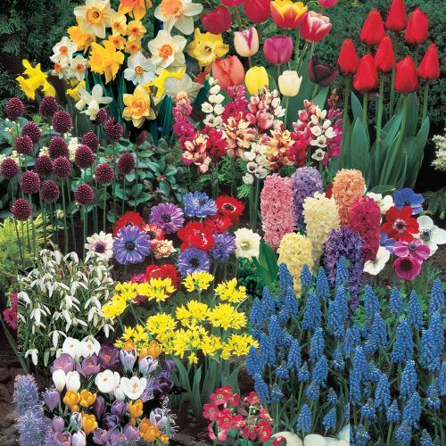 Qu bulbos plantar en oto o remedios - Bulbos de otono ...