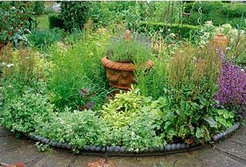 qu plantas cultivar para tener un jard n medicinal