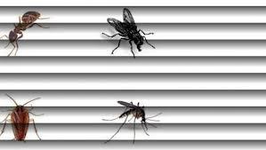 Remedios caseros para acabar con los insectos en el hogar