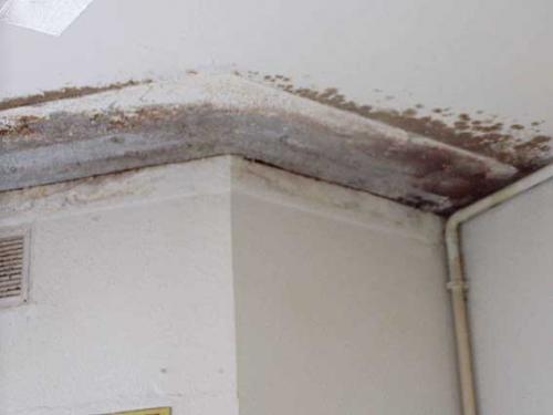 Remedios naturales contra el moho en las paredes