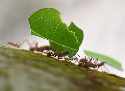 Remedios naturales para combatir las hormigas del jardín | Remedios ...