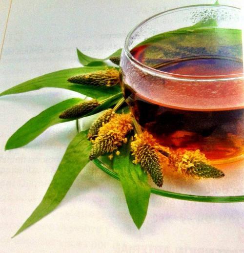 Tisanas adelgazantes y diuréticas